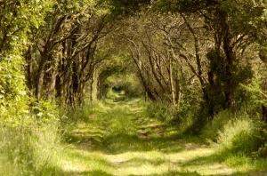 chemin_arbore_JLM