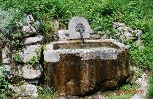 souche fontaine