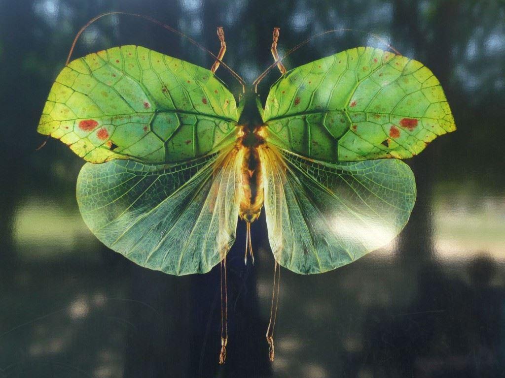 Plantes à Papillons