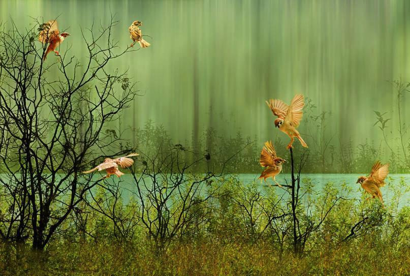 oiseaux <3